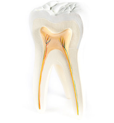 Root Canal Therapy Scottsdale